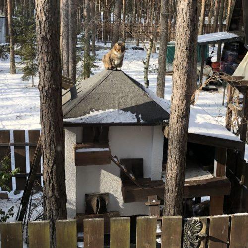 Zimowy dom dla kotów